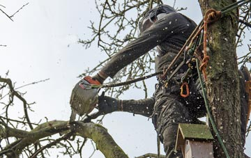 the process of removing dead wood from Sevenoaks Weald trees