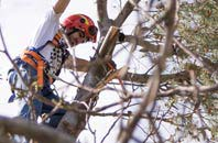 trusted Kent tree dead-wooding services
